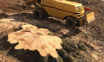 Stump Removal in Oshkosh WI Stump Removal Services in Oshkosh WI Stump Removal Professionals Oshkosh WI Tree Services in Oshkosh WI