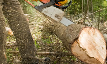 Tree Service in Oshkosh WI Tree Service Estimates in Oshkosh WI Tree Service Quotes in Oshkosh WI Tree Service Professionals in Oshkosh WI