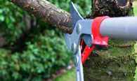 Tree Pruning Services in Oshkosh WI