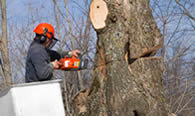 Tree Removal in Oshkosh WI